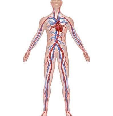 Za zdrave žile Zapper Zaper Zaperino terapija po dr Clark
