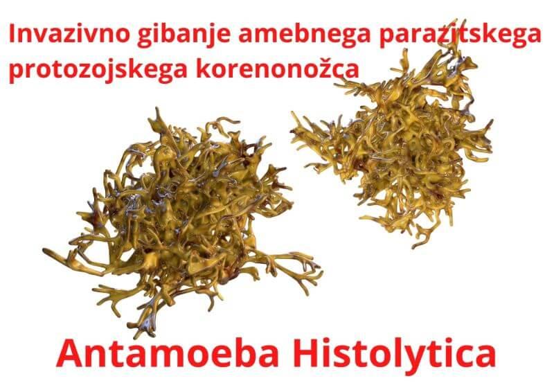 Antamoeba Histolitica protozoj parazit Zapper Zaper Zaperino dr. Clark za uničevanje parazitov
